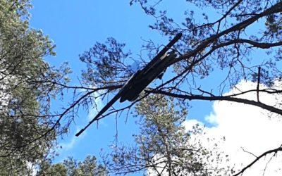 Runaway Latvian drone found meditating in tree